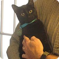 Adopt A Pet :: LIL BIT - Madison, AL