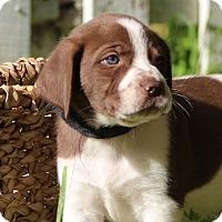 Adopt A Pet :: Lightning - Austin, TX