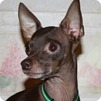 Adopt A Pet :: Ginny - Cheney, KS