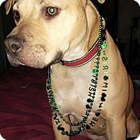 Adopt A Pet :: Myca - Nashville, TN