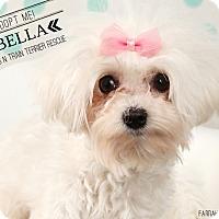 Adopt A Pet :: Bella-Pending Adoption - Omaha, NE