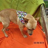 Adopt A Pet :: S979  Bay - Bay Springs, MS