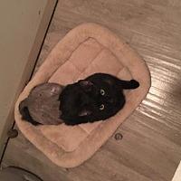 Adopt A Pet :: Cajun (cl) - Alpharetta, GA