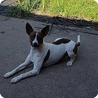 Adopt A Pet :: Wishbone meet me 6/2 - Manchester, CT