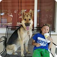Adopt A Pet :: Amber - Albuquerque, NM