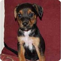 Adopt A Pet :: Coco Puff - Chula Vista, CA