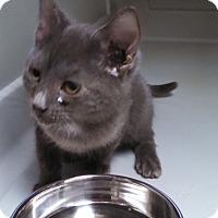 Adopt A Pet :: Thelma - Willington, CT