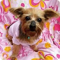 Adopt A Pet :: Willow - Ashland City, TN