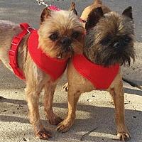 Adopt A Pet :: LEVI & MILEY: Kansas City area - Overland, KS