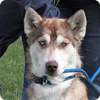 Adopt A Pet :: Dakota - Germantown, MD