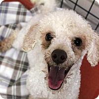 Adopt A Pet :: Rudy - Waco, TX