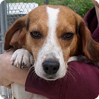 Adopt A Pet :: Highway - Beacon, NY