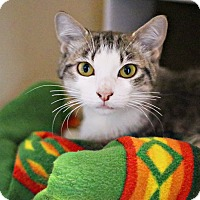 Adopt A Pet :: Elizabeth - Lincoln, NE