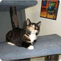 Adopt A Pet :: Bruiser - Milwaukee, WI