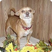 Adopt A Pet :: Priscilla - Chandlersville, OH