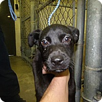 Adopt A Pet :: Nelly - Rocky Mount, NC