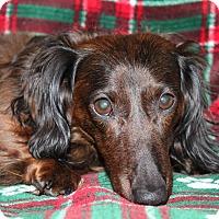 Adopt A Pet :: Beau - Louisville, CO