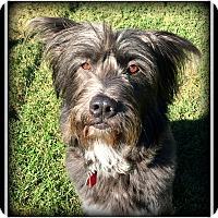Adopt A Pet :: Murphy - Indian Trail, NC