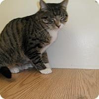 Adopt A Pet :: Templeton - Milwaukee, WI