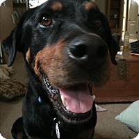 Adopt A Pet :: Willow - Gilbert, AZ