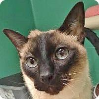 Adopt A Pet :: Noahie - Davis, CA