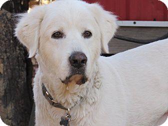 Great Pyrenees Dog for adoption in Kiowa, Oklahoma - Boston