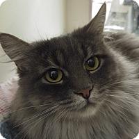 Adopt A Pet :: Winnie - Midvale, UT