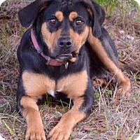 Adopt A Pet :: Molly~Adopted - Brattleboro, VT
