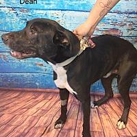 Adopt A Pet :: DEAN - Hibbing, MN