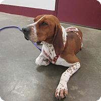 Adopt A Pet :: Lucha - LaGrange, KY
