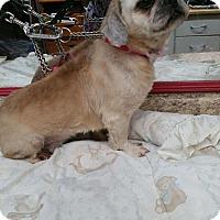 Adopt A Pet :: Prince Of Zena - Crump, TN