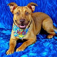 Adopt A Pet :: Rex - Jackson, MS