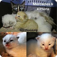 Adopt A Pet :: Mercedes - Temecula, CA