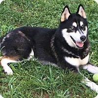 Adopt A Pet :: Yukon - Roswell, GA