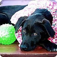 Adopt A Pet :: Odessa - Albany, NY