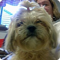 Adopt A Pet :: Chrissy - Cumberland, MD