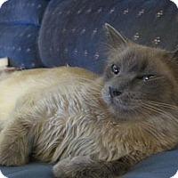 Adopt A Pet :: Lila - lake elsinore, CA