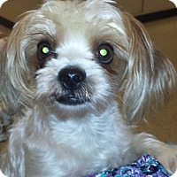 Adopt A Pet :: Devon - Houston, TX