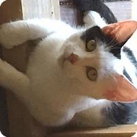 Adopt A Pet :: Pearl - Lebanon, PA