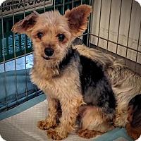 Adopt A Pet :: Radley - Newark, DE