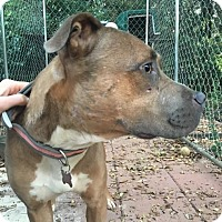 Adopt A Pet :: Diem - Boston, MA