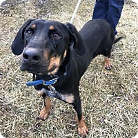 Adopt A Pet :: Princess - Sparta, NJ