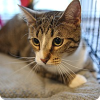 Adopt A Pet :: Harvey - Olive Branch, MS