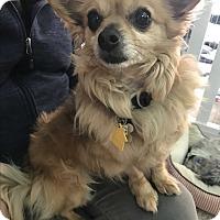 Adopt A Pet :: Papas - Thousand Oaks, CA