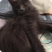 Adopt A Pet :: Gidget - Tega Cay, SC