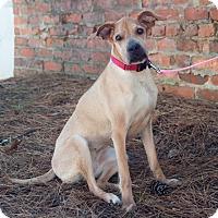Adopt A Pet :: Eloise - Atlanta, GA