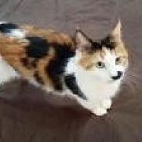 Adopt A Pet :: Citabria - Santa Cruz, CA