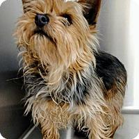Adopt A Pet :: Petal - Newark, DE