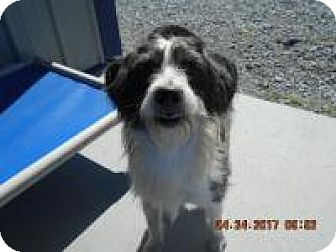 Terrier (Unknown Type, Medium) Mix Dog for adoption in Hartford, Kentucky - Pikachu
