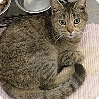 Adopt A Pet :: Lolly with the Mystic Green Eyes - Rohrersville, MD